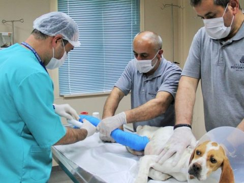 The Services Offered Vet Clinics